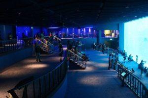 Vé vào sea aquarium singapore